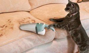 Уборка шерсти домашних животных